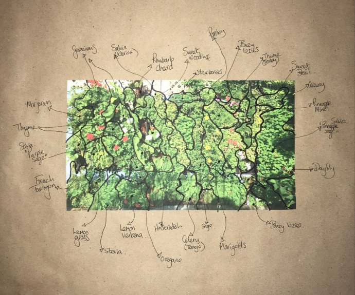 Stoots herb wall diagram