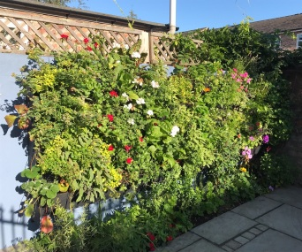 The Stoots Herb Wall